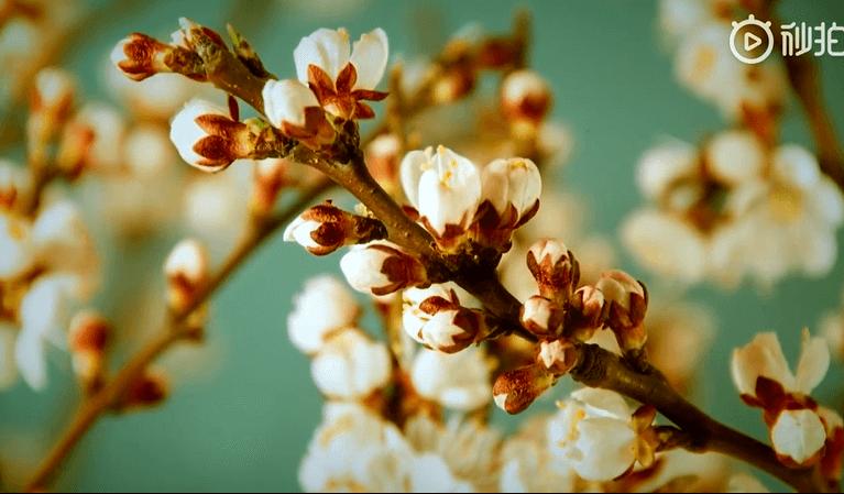 歌曲丨《那年四月》:税务人暖心致敬28年税宣月